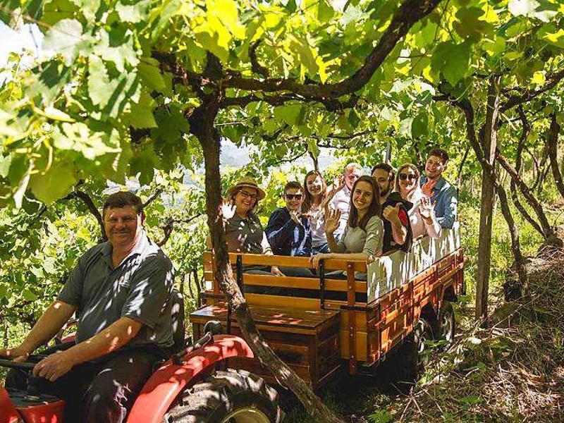 Imagem representando o passeio Tour Vindima em Bento Gonçalves